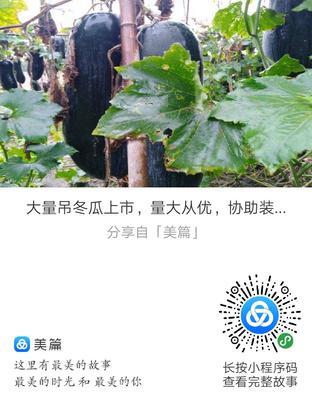 安徽省亳州市蒙城县吊冬瓜 15斤以上 黑皮