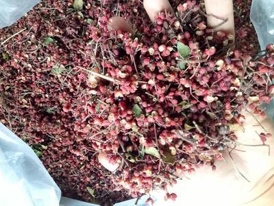 陕西渭南大红袍花椒 一级 干花椒
