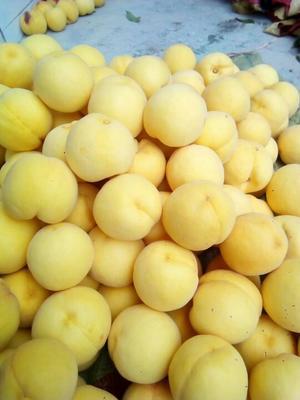 陕西咸阳锦绣黄桃 70mm以上 4两以上