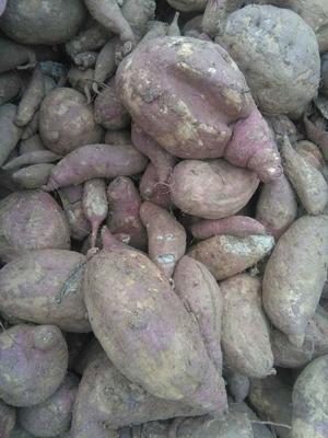 山东临沂红薯18号 3两以上 红皮