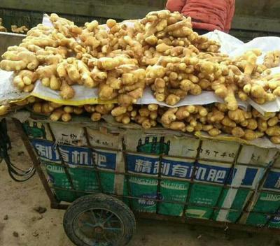 这是一张关于大黄姜 带土 4两以上的产品图片