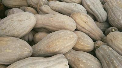 四川绵阳南瓜 长条形 6~10斤