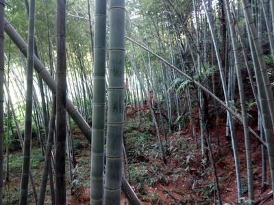 这是一张关于竹片的产品图片