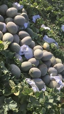 新疆吐鲁番西州蜜瓜 5斤以上