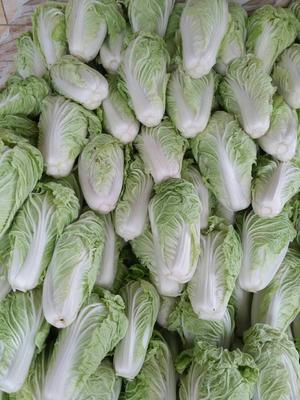河南省开封市开封县夏阳白菜 2~3斤 二毛菜