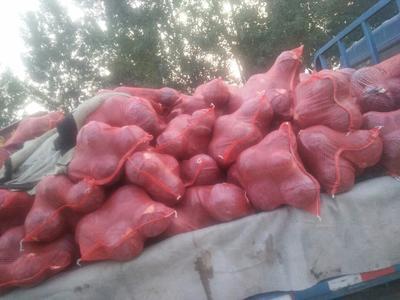 河北省保定市定州市紫白菜 1~2斤 净菜