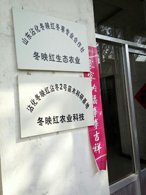 山东省滨州市沾化区冬枣树苗