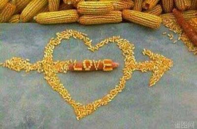 内蒙古鄂尔多斯先玉335玉米粒 霉变≤1% 净货