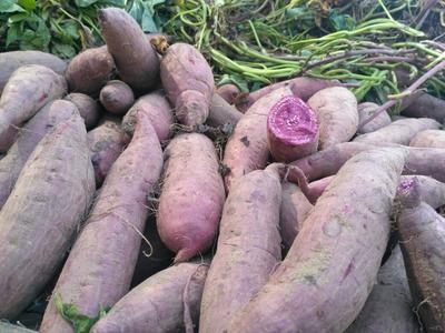 河南开封紫罗兰紫薯 3两以上