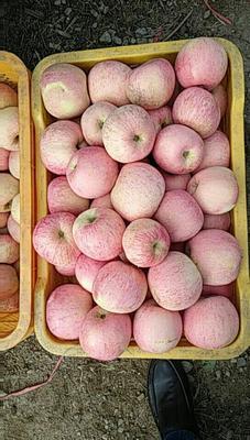 这是一张关于冰糖心苹果 70mm以上 膜袋 片红 苹果 嘎啦苹果的产品图片