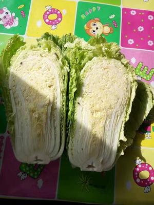 吉林省四平市公主岭市91-12白菜 3~6斤 净菜