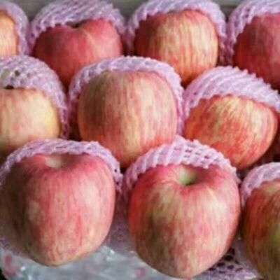 这是一张关于冰糖心苹果 纸袋 片红 75mm以上的产品图片