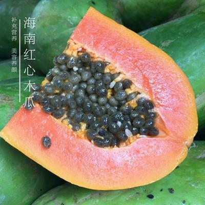 广西南宁红心木瓜 1 - 1.5斤