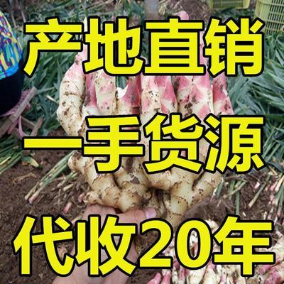 这是一张关于小黄姜 5两以上 带土 黄姜批发生姜产地老姜批发鲜姜出售的产品图片