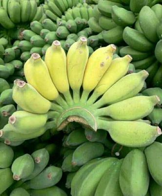 广西南宁小米蕉 40斤以下 八成熟 九斤包邮