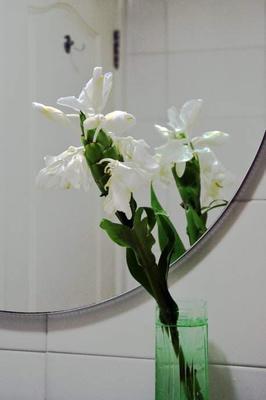 江西南昌姜花 赣都姜花基地出售姜花苗及姜花鲜花