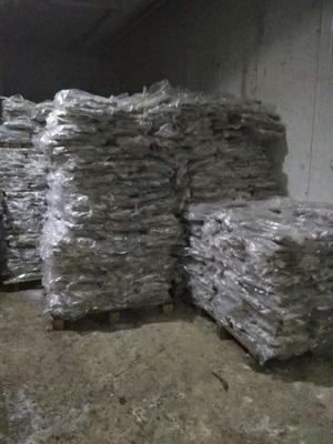 河北秦皇岛白鲳 野生 0.5公斤以下