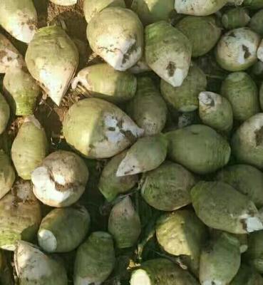 山西忻州青皮绿萝卜 2~2.5斤