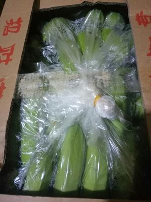 山东淄博广西蕉 七成熟 40斤以下 广西焦
