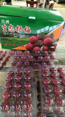 福建龙岩东魁杨梅 4 - 5cm 一斤大概十五个左右的大果
