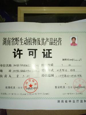 湖南岳阳特种野猪 统货 100斤以上