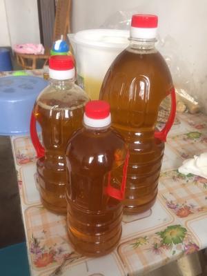 江西赣州野生山茶油