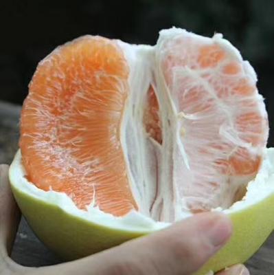 这是一张关于平和蜜柚 2.5斤以上 五斤两只装包邮的产品图片
