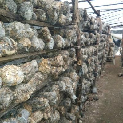 这是一张关于废食用菌棒的产品图片