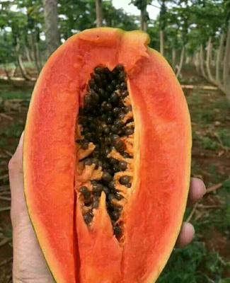 这是一张关于红心木瓜 1.5 - 2斤的产品图片
