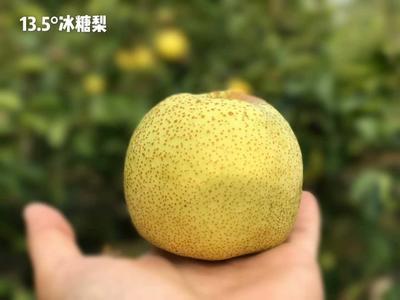 这是一张关于砀山酥梨 200-250g 80mm以上的产品图片
