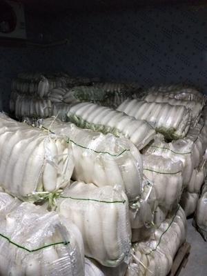 河南省安阳市滑县301白萝卜 1.5~2斤