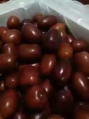 陕西榆林其它水果干 陕北狗头枣/鲜枣