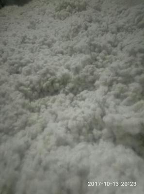河北邯郸平原棉花