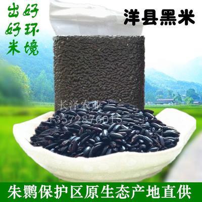 陕西汉中洋县黑米 原生态非杂交晚熟高品质黑香糯米