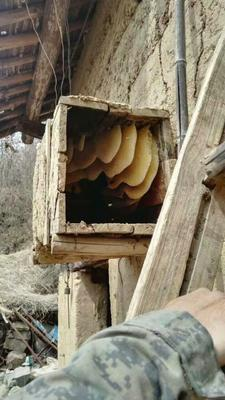 陕西商洛土蜂蜜 玻璃瓶装 98% 2年以上