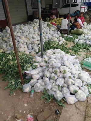 河南省开封市祥符区雪玉菜花 紧密 2~3斤 乳白色