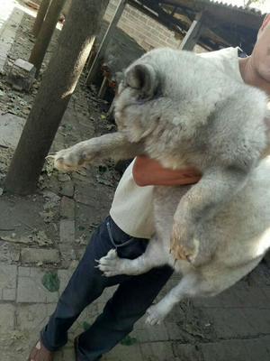 山东潍坊动物毛皮