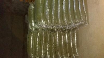 山东潍坊绿芽豆 袋装 1等品