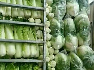 山西省晋中市榆次区津青75白菜 2~3斤 净菜