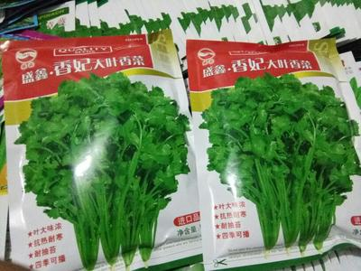 北京海淀区香菜种子
