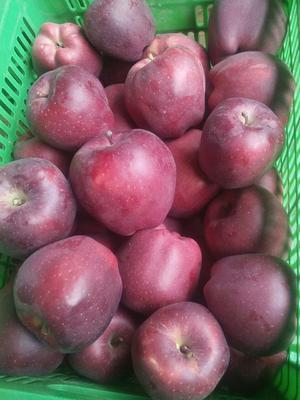 这是一张关于花牛苹果 光果 全红 75mm以上的产品图片