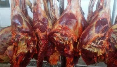 山东菏泽马肉 生肉