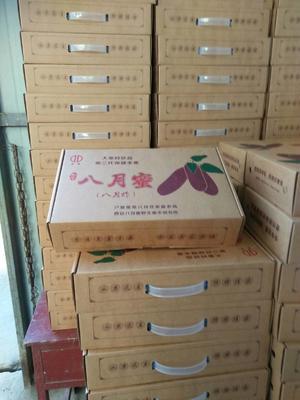 陕西西安紫色一号八月瓜 90-100g