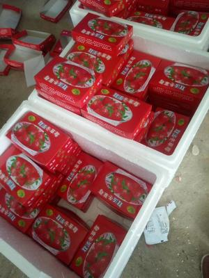山西太原蒙特瑞草莓 20克以上