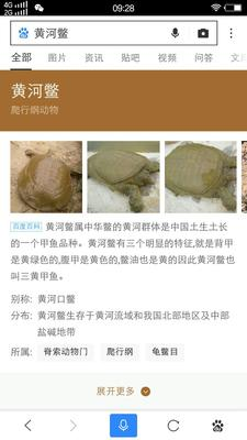江苏南京鼓楼区鳖甲