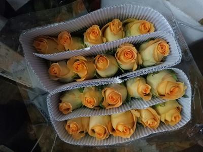 这是一张关于黄玫瑰的产品图片