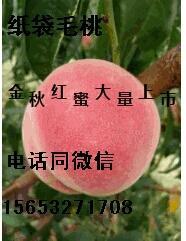 山东青岛金秋红密 75mm以上 4-5两