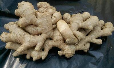 这是一张关于老姜 6两以上 带土的产品图片