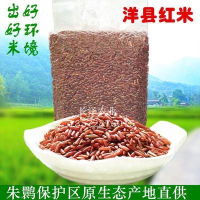 陕西省汉中市洋县洋县红米