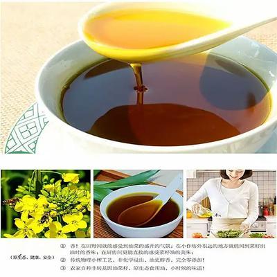 湖北宜昌自榨纯菜籽油 10L/桶